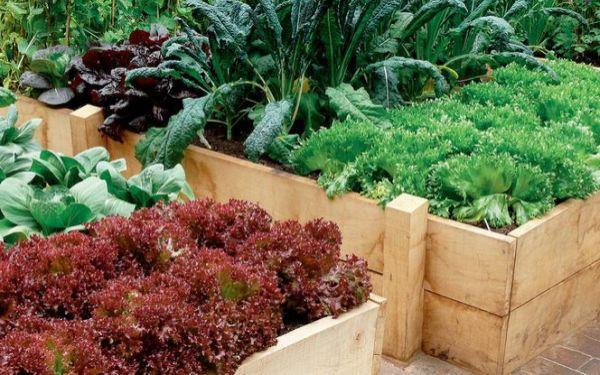 Skrzynia na warzywa: jak zrobić