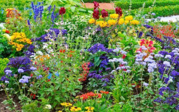 Jakie rośliny kwitną i owocują w ogrodzie w lipcu